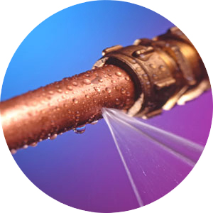 http://www.prise2tete.fr/upload/FRiZMOUT-Pas-Huitre-ni-Truite-mais-Fuite.jpg
