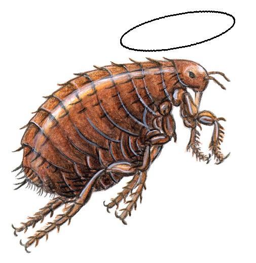 http://www.prise2tete.fr/upload/Flying_pyros-4-oiseau.jpg