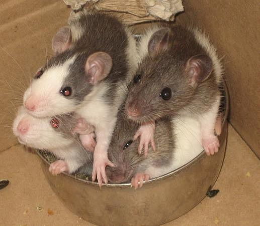 http://www.prise2tete.fr/upload/Flying_pyros-5-radicaux.jpg