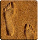 http://www.prise2tete.fr/upload/HAMEL-p.jpg