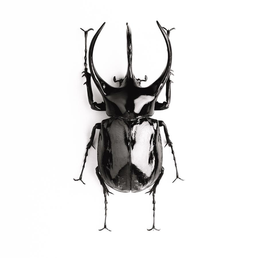 http://www.prise2tete.fr/upload/MthS-MlndN-dors.jpg