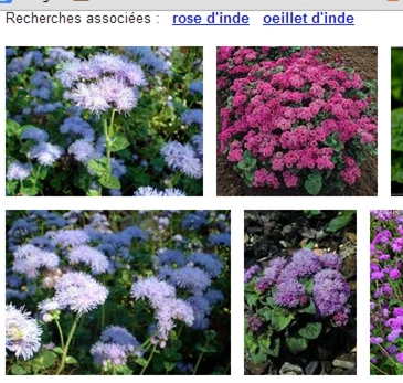 http://www.prise2tete.fr/upload/NickoGecko-Agerate.jpg