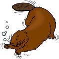 http://www.prise2tete.fr/upload/Papy04-castor.jpg