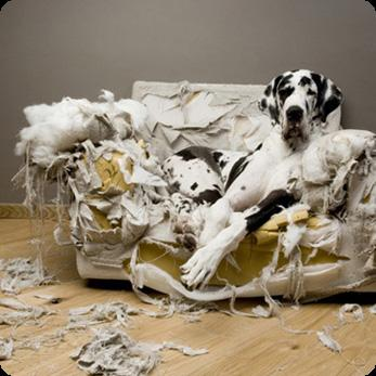 http://www.prise2tete.fr/upload/elpafio-canape.jpg