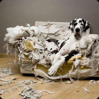 http://www.prise2tete.fr/upload/elpafio-canape.jpg