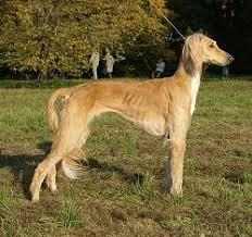 http://www.prise2tete.fr/upload/looozer-Tazi.jpg