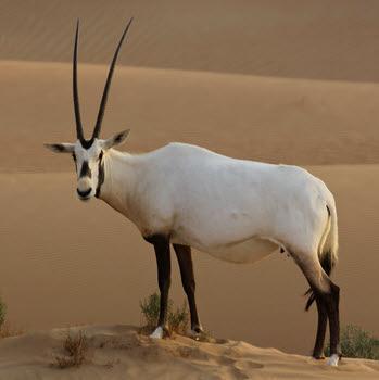 http://www.prise2tete.fr/upload/looozer-oryx.jpg