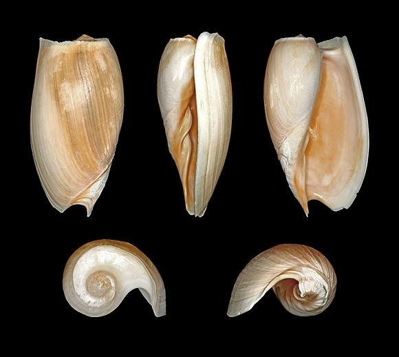 http://www.prise2tete.fr/upload/looozer-yetsJPG.jpg