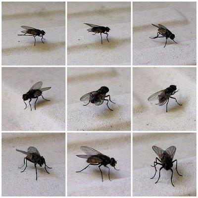 http://www.prise2tete.fr/upload/maitou22-Mouches1.jpg
