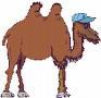 http://www.prise2tete.fr/upload/maitou22-chameau.jpeg