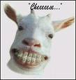 http://www.prise2tete.fr/upload/maitou22-cheese.jpeg