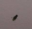 http://www.prise2tete.fr/upload/maitou22-mouche.jpeg