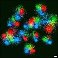 http://www.prise2tete.fr/upload/maitou22-quarks9.jpg