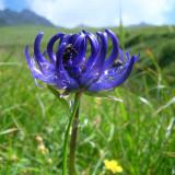 http://www.prise2tete.fr/upload/maitou22-raiponcebleue.jpg