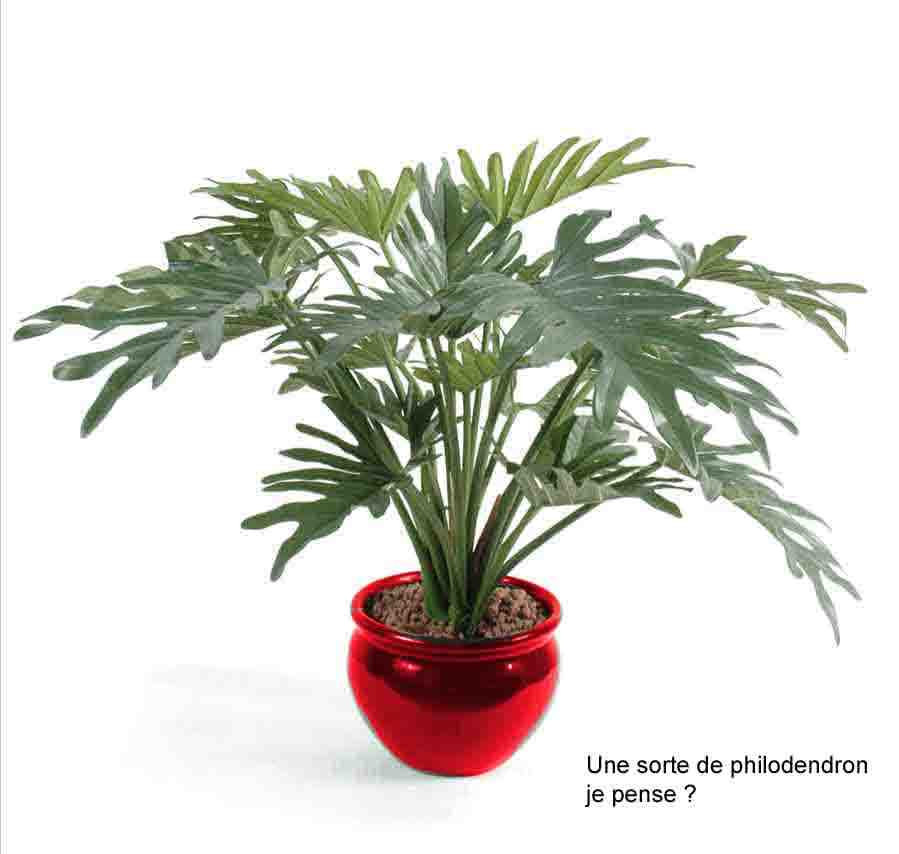 http://www.prise2tete.fr/upload/nobodydy-M500-plante.jpg