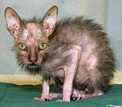 http://www.prise2tete.fr/upload/sosoy-chat.jpg