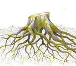 http://www.prise2tete.fr/upload/sosoy-langelot12.jpg