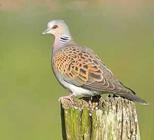 http://www.prise2tete.fr/upload/sosoy-langelot3.jpg