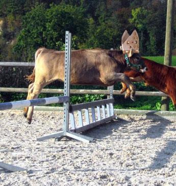 http://www.prise2tete.fr/upload/sosoy-papiauchequiresoud.jpg